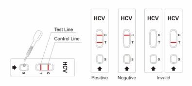 Result Interpretation of HCV TEST